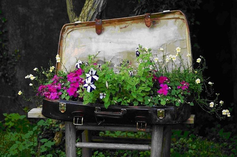 клумба в чемодане