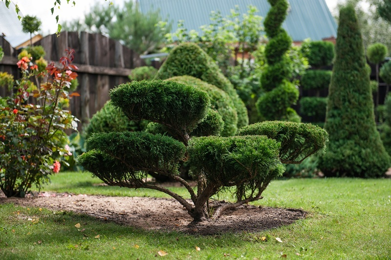 дерево с кроной бонсай в ландшафтном дизайне