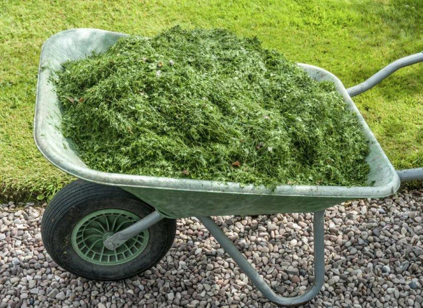скошенная трава для компоста