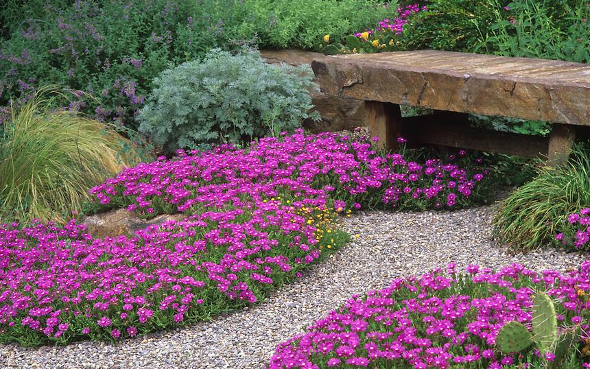 почвопокровные в саду