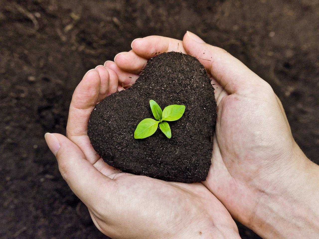 определение состава почвы