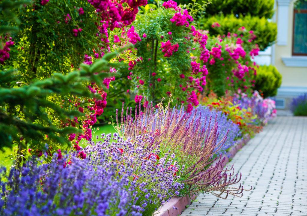 оформление цветочной клумбы на участке 10 соток