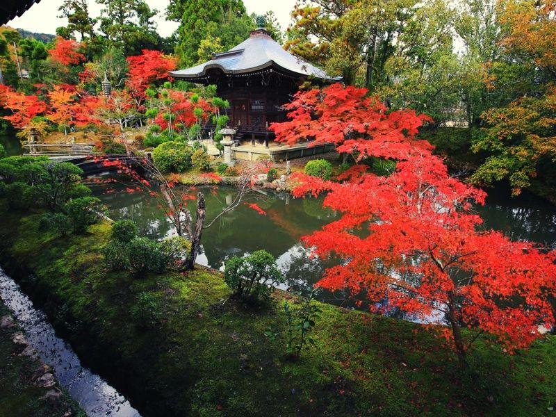 японские сады киото