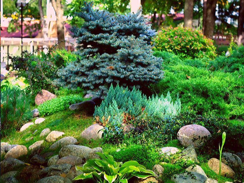 каменный сад на возвышенности с хвойниками