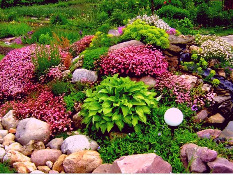 цветущая альпийская горка