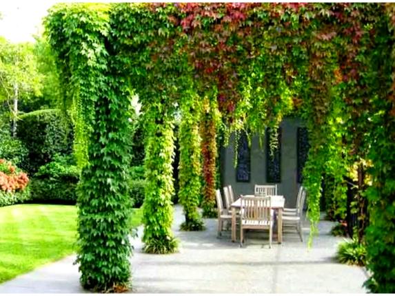 плетущиеся многолетние растения для сада