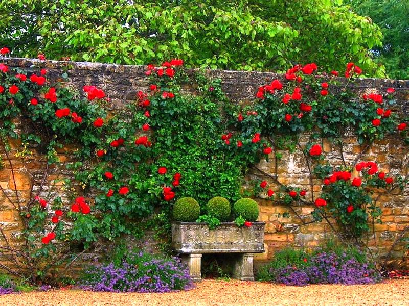 вертикальное озеленение в ландшафтном дизайне сада
