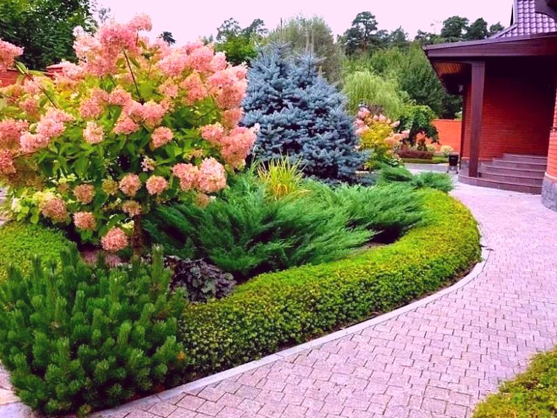 Пример использования кустарников в ландшафте