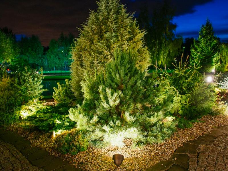 декоративная подсветка хвойников в каменном саду