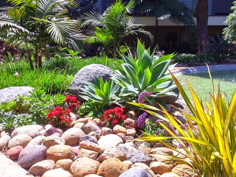 каменный  сад в тропическом стиле
