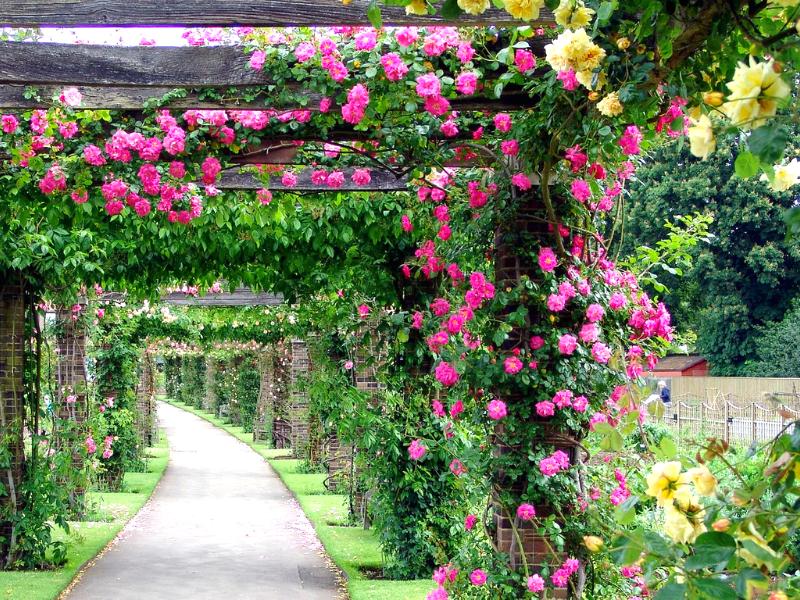 Оформление арки цветущими лианами