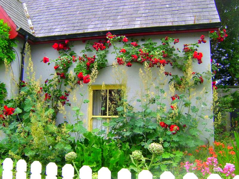 Домик увитый плетущимися розами