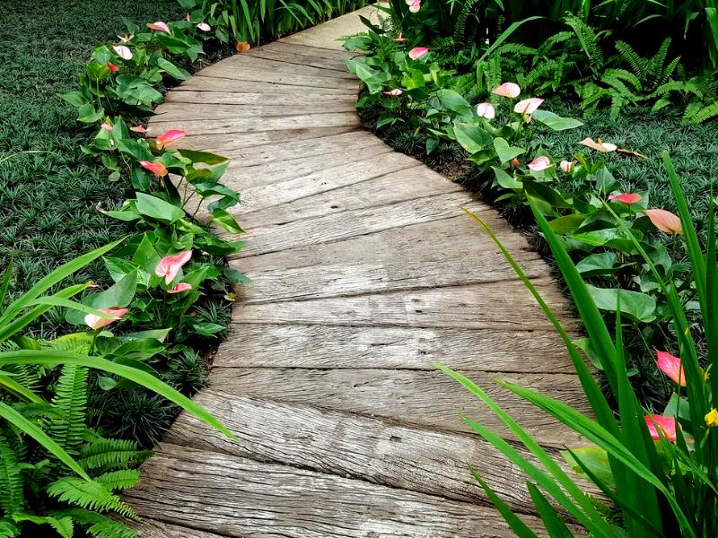 тропинка в виде деревянного настила