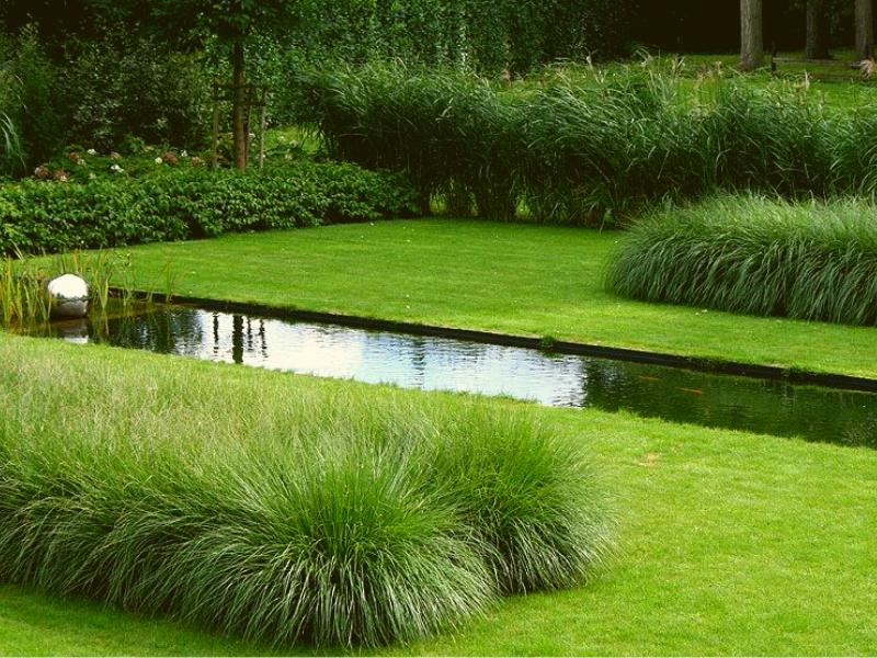 Растения в ландшафте в минималистском стиле