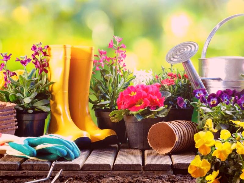 Обувь и перчатки для сада и огорода